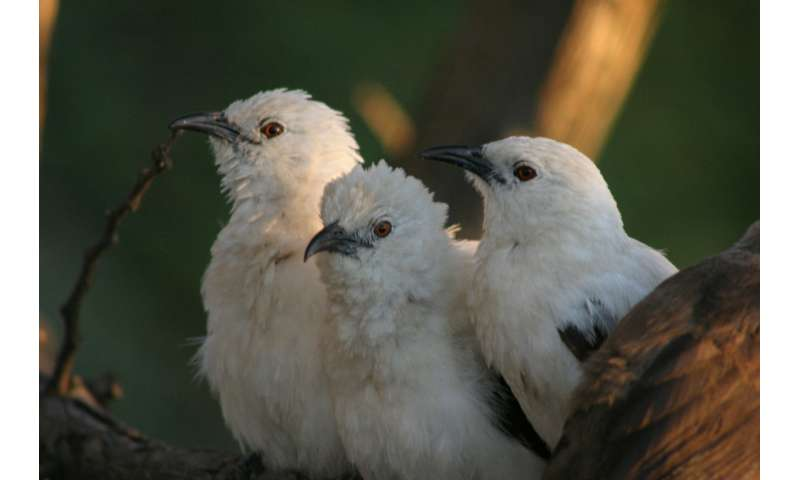 Flight delays: Study finds out why some African birds stay home longer