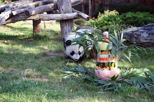 France's first baby panda celebrates one-year anniversary
