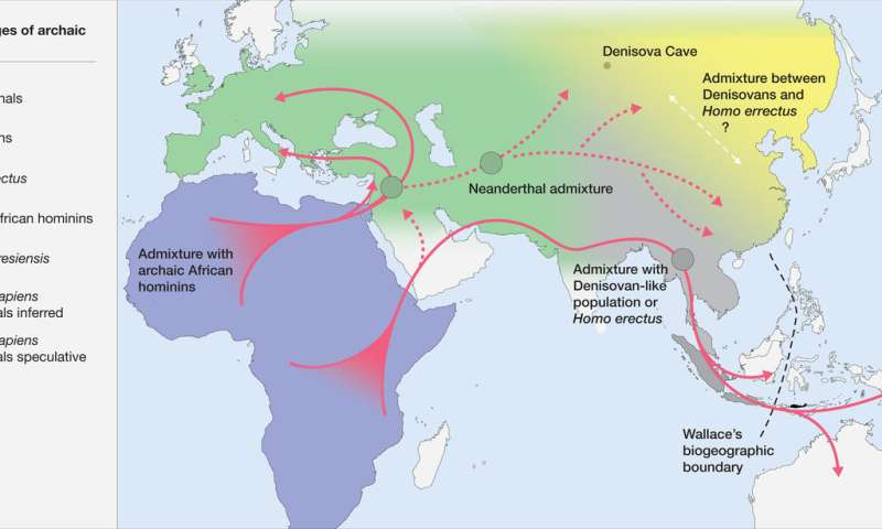 Homo sapiens developed a new ecological niche that separated