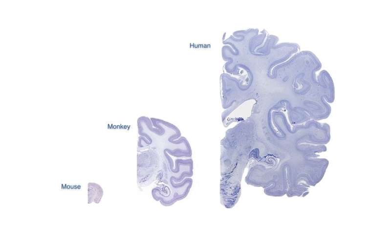 How to build a brain: discovery answers evolutionary mystery