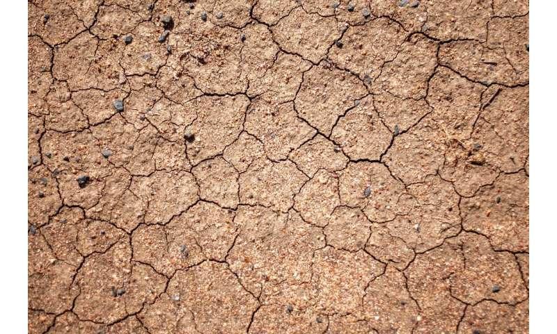 En 100 años, tal vez nuestra comida no se cultive en el suelo