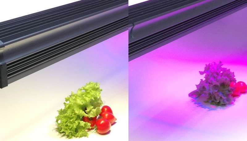 Indoor farms could fine-tune the flavours of our food