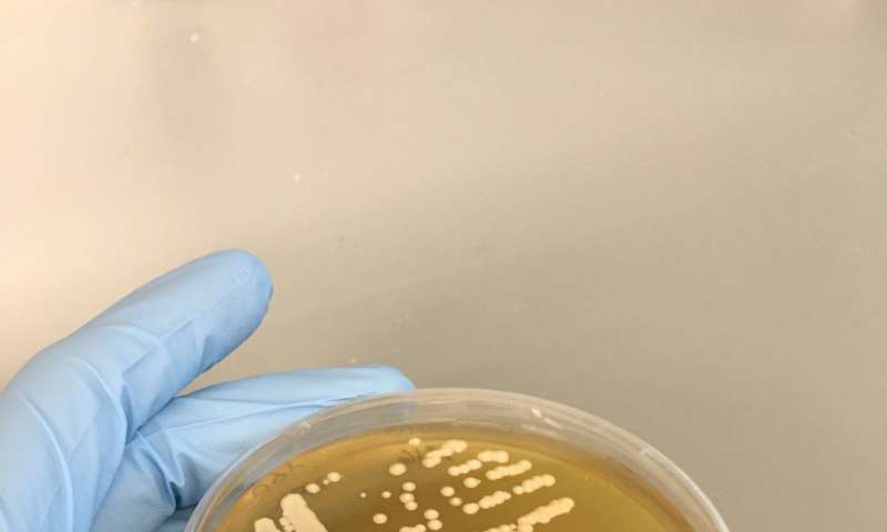 Insects could help us find new yeasts for big business