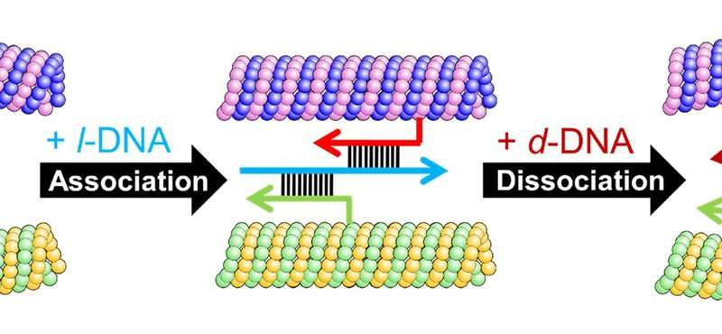 Letting molecular robots swarm like birds