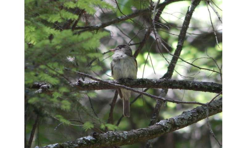 Long-term study reveals one invasive insect can change a forest bird community