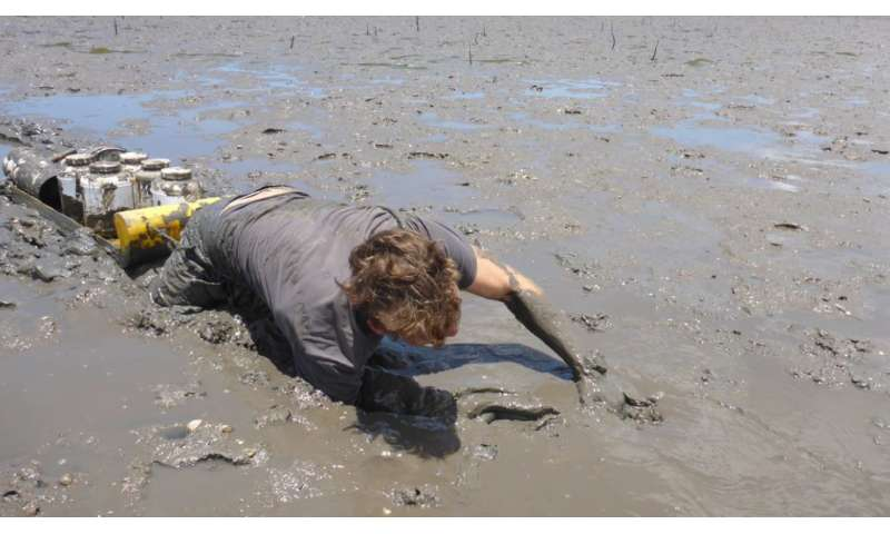 Loss of intertidal ecosystem exposes coastal communities