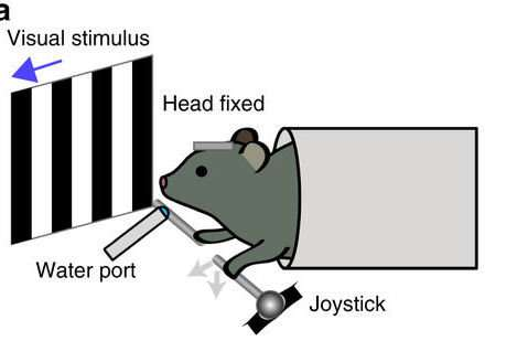 Mice, motor learning, and making decisions