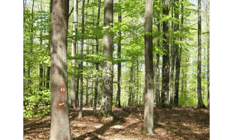 Mixed forests: Ecologically and economically superior