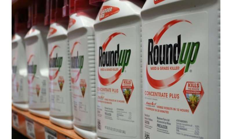 Monsanto could face massive losses if lawyers show in court that the company's herbicide Roundup caused a groundskeeper's lethal