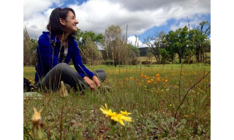 Native wildflowers bank on seeds underground to endure drought