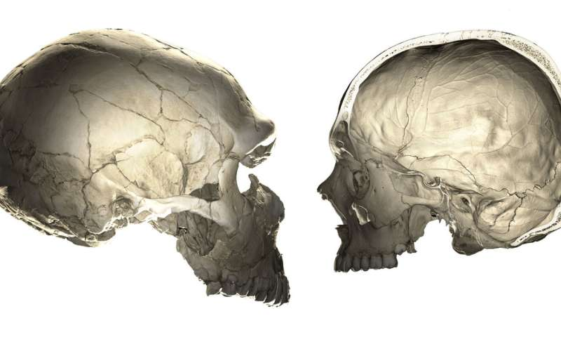 Neandertal genes give clues to human brain evolution