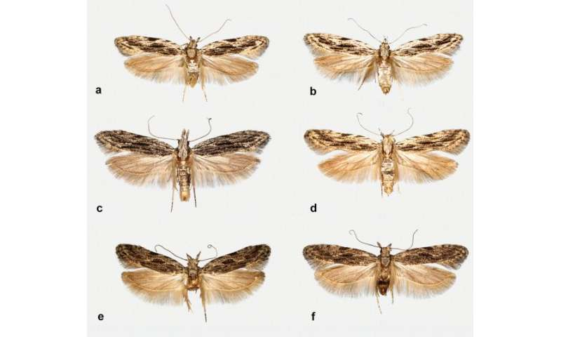 New moth species discovered in Denmark