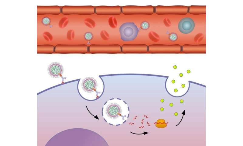 New platform based on biology and nanotechnology carries mRNA directly to target cells
