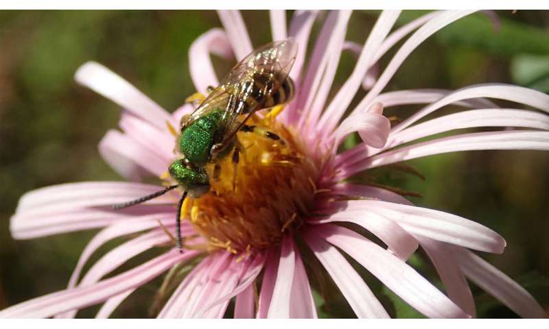 New publication about bees and their New England habitats available