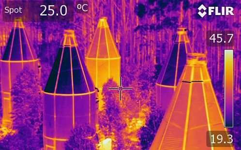 New research explains how native trees sweat out heat waves