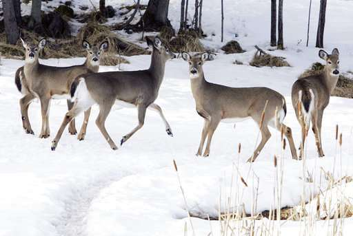 Northeastern US seeks to prevent arrival of deer disease