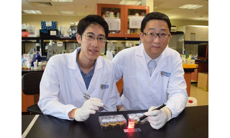 NUS researchers develop wireless light switch for targeted cancer therapy