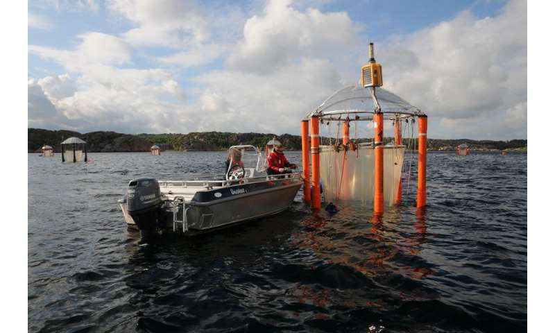 Ocean acidification: Herring could benefit from an altered food chain