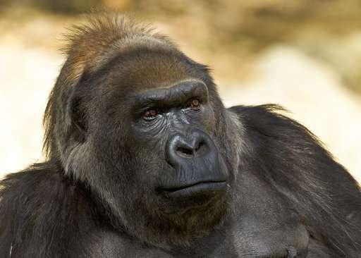 One of world's oldest gorillas dies at San Diego Safari Park