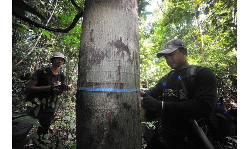 Orangutan Kalimantan survey in Sebangau National Park—Bukit Baka Bukit Raya National Park Corridor