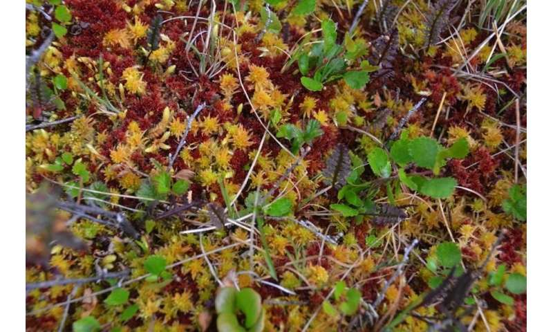 Peat expansion in the Arctic tundra could play a role in cooling a warming planet