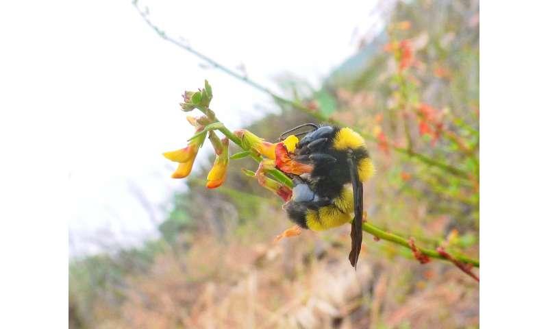 Biodiversidad de polinizadores
