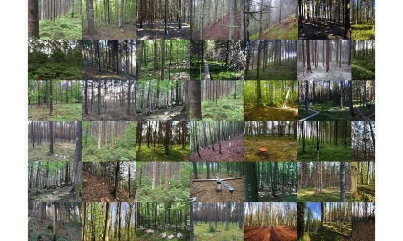 Pollution hits the fungi that nourish European trees
