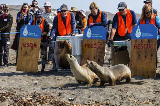 Potentially deadly infection hits California sea lions