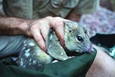 Protected areas alone won't save all threatened species
