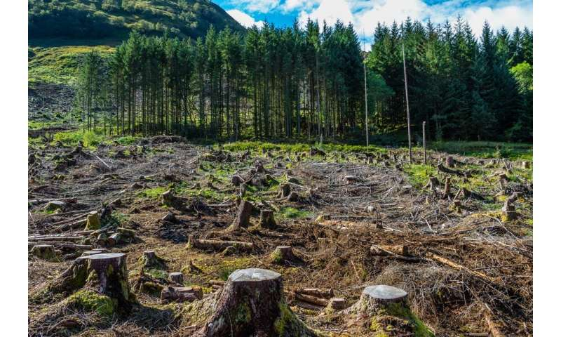 Rare woodland wildlife at risk because of 50-year-old tree felling rules