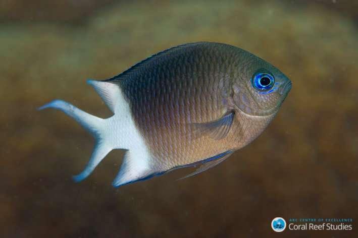 Reef fish inherit tolerance to warming oceans