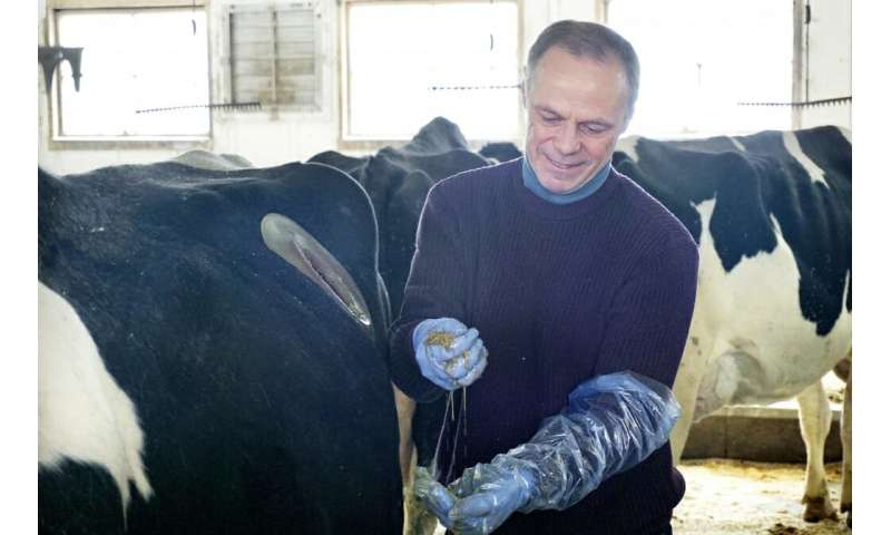 Researcher follows dairy cows' carbon footprints from barn to field