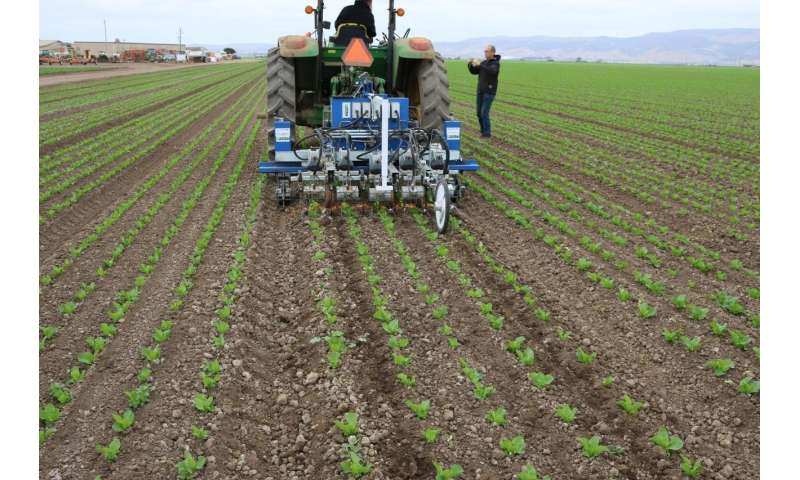 Robotic weeders: to a farm near you?