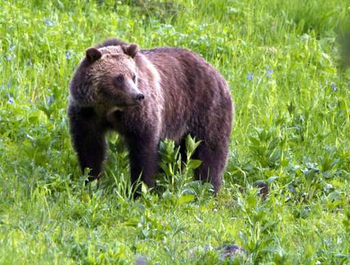 Ruling that blocked grizzly bear hunts appealed by US