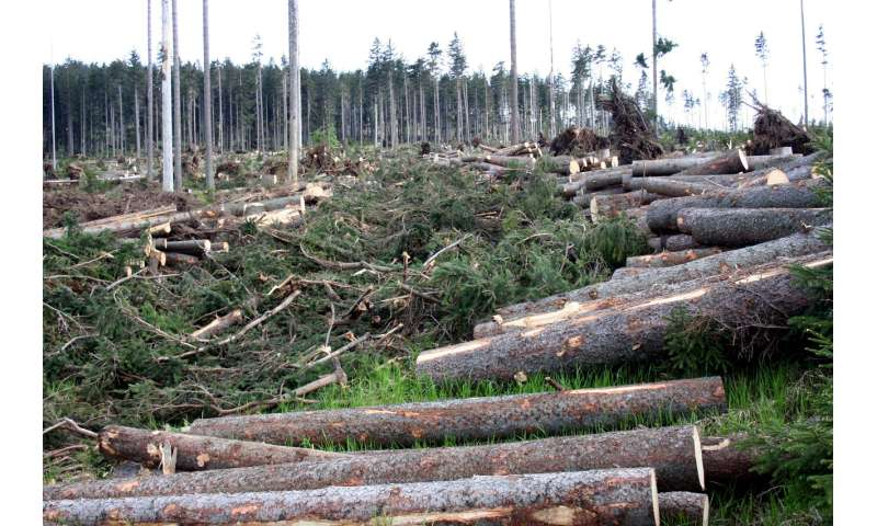 Salvage logging is often a pretext for harvesting wood