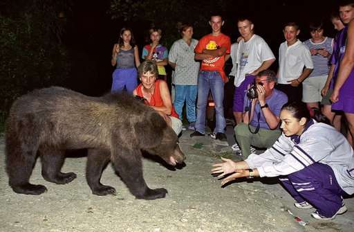 Scientists, animal activists: Don't cull Romanian brown bear