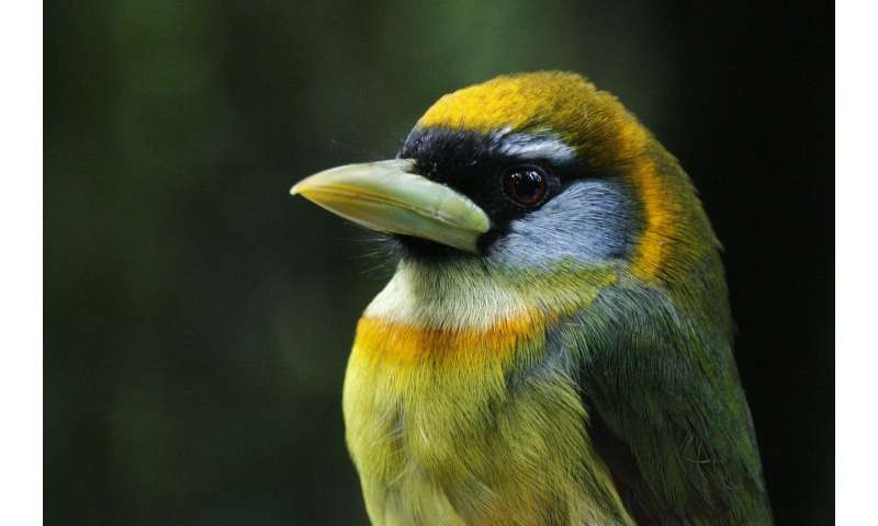 Scientists to build the avian tree of life