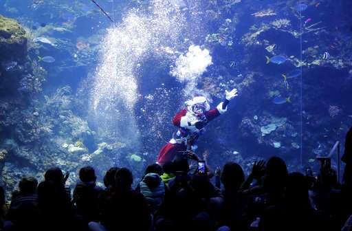 Scuba-diving Santa brings holiday cheer to fish, museumgoers
