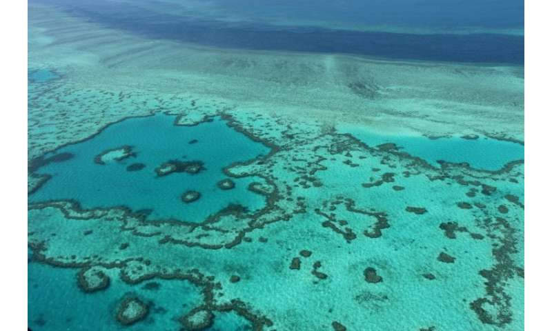 Shark attacks are rare in the Whitsundays—a collection of spectacular tropical islands at the heart of the Barrier Reef