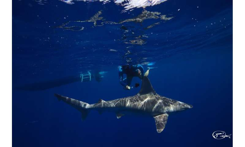 Shark tourism can change your mind about these much-maligned predators