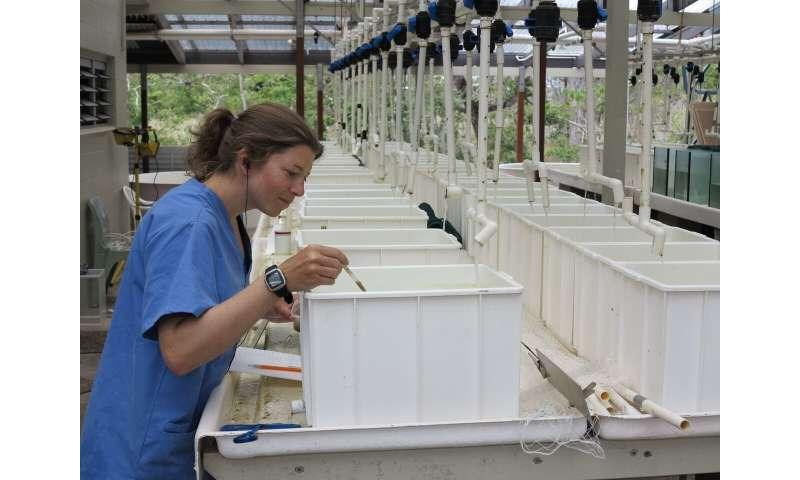 Staying clean keeps seafish smart