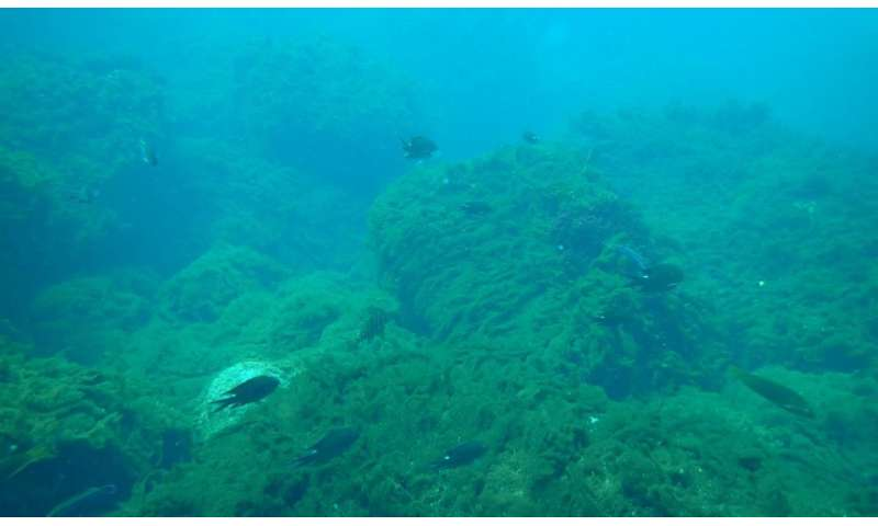 Study shows ocean acidification is having major impact on marine life