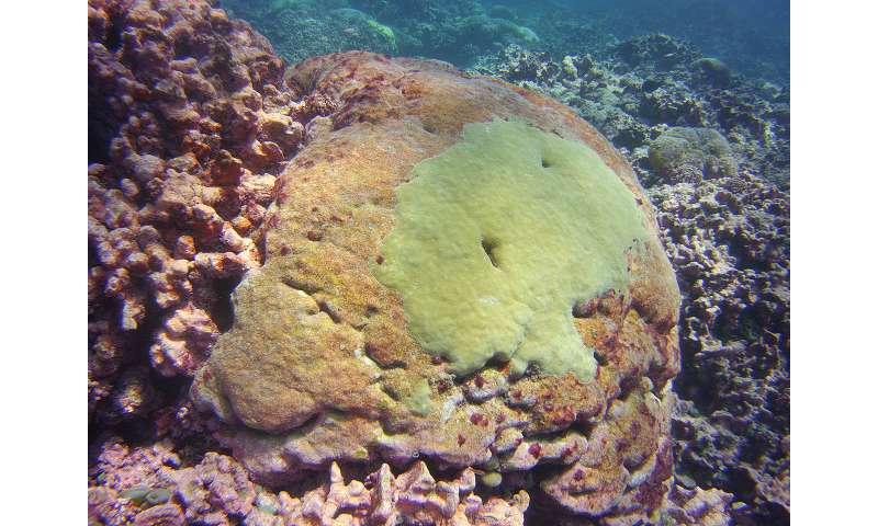 Study Tracks Severe Bleaching Events on a Pacific Coral Reef Over Past Century