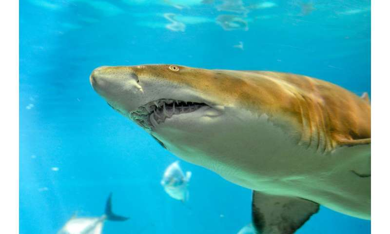 Sustainable shark trade bill is supported by both conservationists and fishing industry