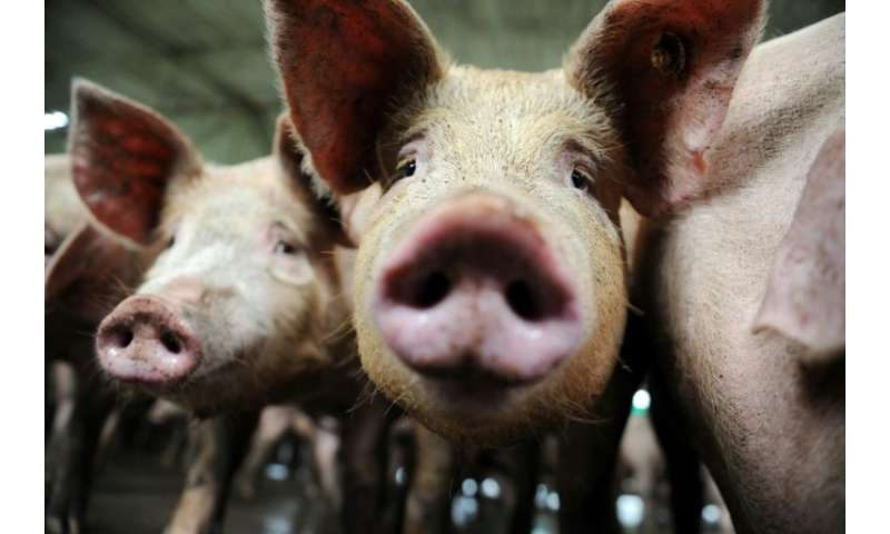 The European Union on Monday welcomed Belgium's decision to slaughter thousands of healthy pigs to isolate and eradicate an outb