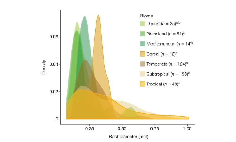 Theory suggests root efficiency, independence drove global spread of flora
