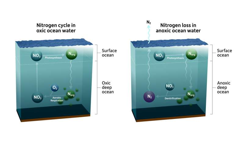 Tiny microenvironments in the ocean hold clues to global nitrogen cycle