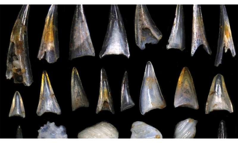 Tiny teeth tell the story of two fish species' rapid evolution