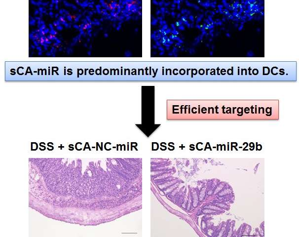 Treating inflammatory bowel disorder by delivering microRNAs