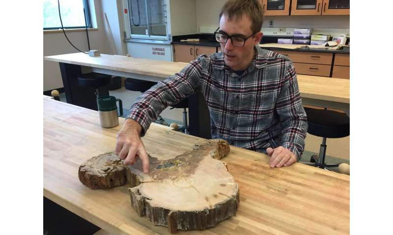 Tree-ring analysis explains physiology behind drought intolerance